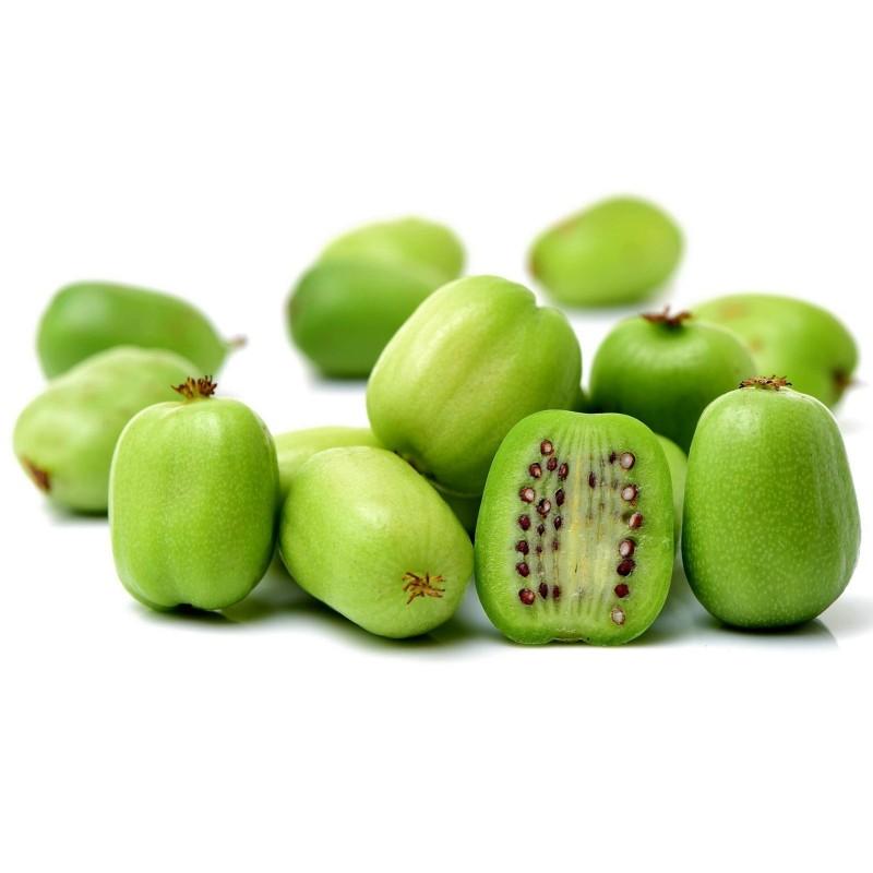 Hardy Kiwi seeds -34C (actinidia arguta) 1.5 - 1