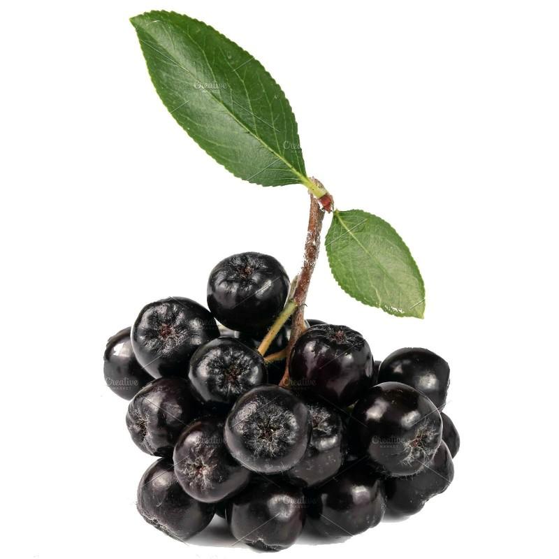 Chokeberry Seeds (Aronia melanocarpa) 2.25 - 1