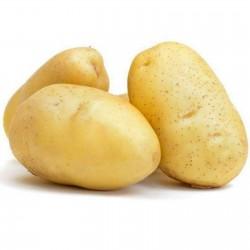 White Skin - White Flesh KENNEBEC Potato Seeds  - 4