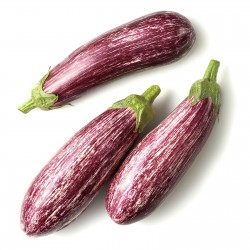 Graines d'aubergines grecques TSAKONIKI  - 4