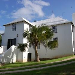 Sabal bermudana - Bermuda-Palmetto Palmen Samen  - 3