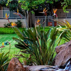 Orange Bird of Paradise Flower Seeds (Strelitzia reginae)  - 4