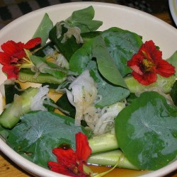 Graines de Grande Capucine - comestible (Tropaeolum majus)  - 3