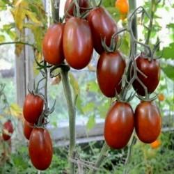 Sementes de tomate Ameixa preta - Black Plum Seeds Gallery - 4
