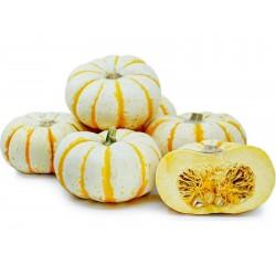 LIL' PUMP-KE-MON Pumpkin Seeds Seeds Gallery - 5