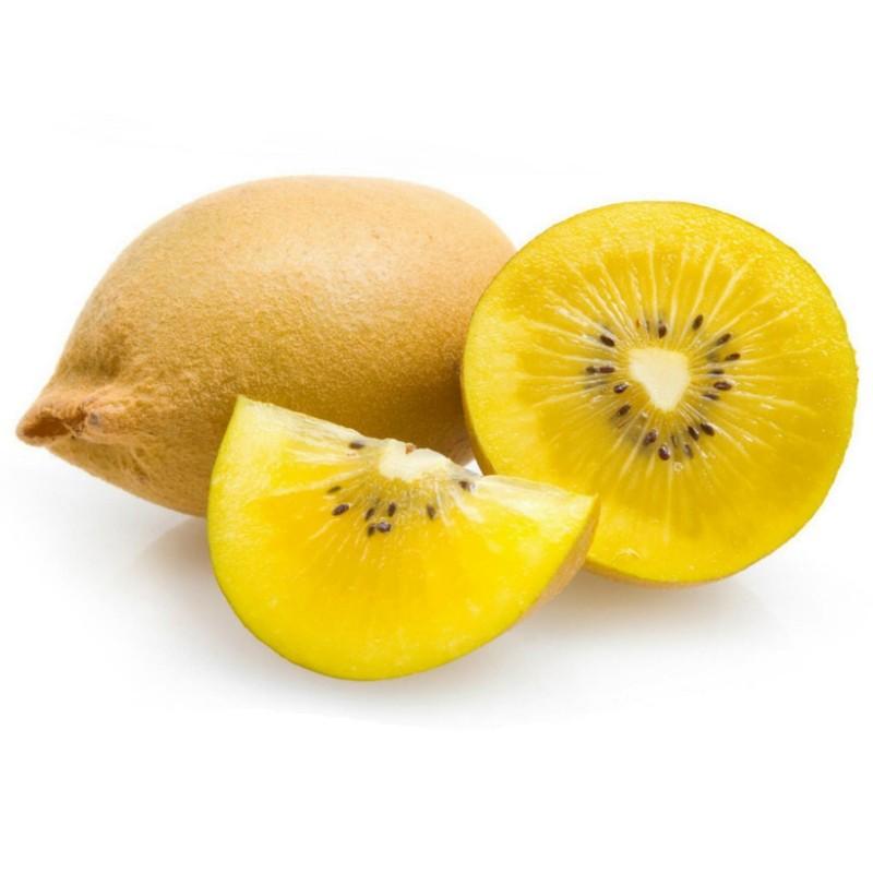 Golden Kiwi Seme izdrzava do - 25°C  - 4