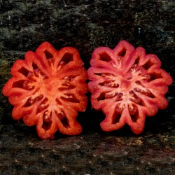 Pink Accordion Tomato Seeds Seeds Gallery - 6