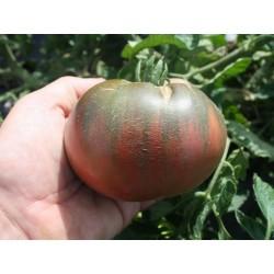 Cherokee Purple Tomato Seeds Seeds Gallery - 2