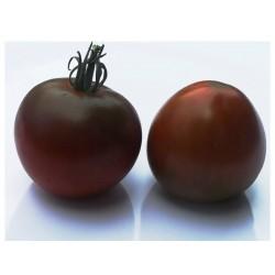 Sementes de tomate Black Prince  - 4