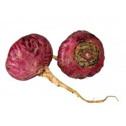 Graines de Maca rouge (Lepidium meyenii)  - 3