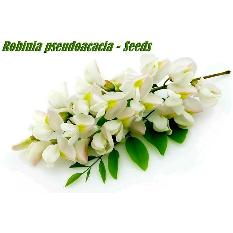 Seme Bagrema (lat. Robinia pseudoacacia)  - 9