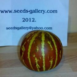 Armenian Tigger Melon Seeds  - 5
