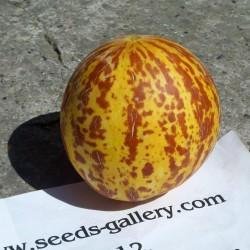 Armenische Tiger Melone BIO Samen  - 6