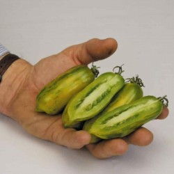 Green Sausage Tomaten Samen  - 4