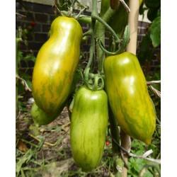 Ντομάτα σπόρος Πράσινο λουκάνικο (Green Sausage)  - 5