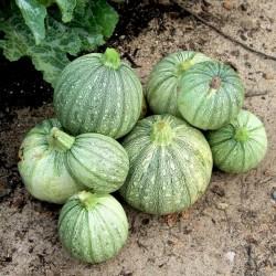 Semi di zucchina RONDE DE NICE  - 2