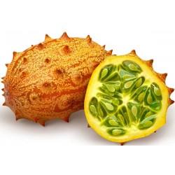 Graines de Kiwano - Melon A Cornes (Cucumis metuliferus) Seeds Gallery - 4