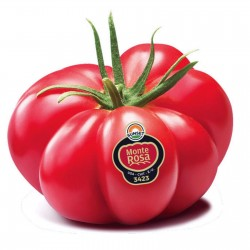 Monte Rosa Ribbed Pink Tomato Seeds Seeds Gallery - 8