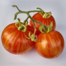 Sementes de tomate Tigerella  - 1