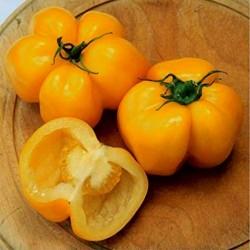 Yellow Stuffer (Tomatenpaprika) Tomaten Samen  - 4