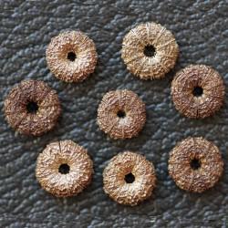 Semi di malva selvatica (Malva sylvestris)  - 1
