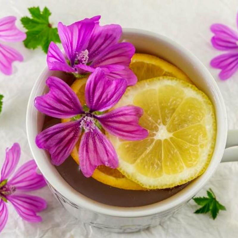 Sementes de Malva sylvestris - Planta Medicinais  - 5