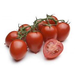 Sementes de tomate Piccadilly  - 1