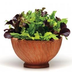 Seme - Mesavina Najboljih Salata  - 2