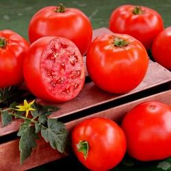Graines de tomates hybrides de haute qualité Lider F1  - 3