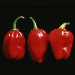 Chili Numex Suave Red Seme  - 2