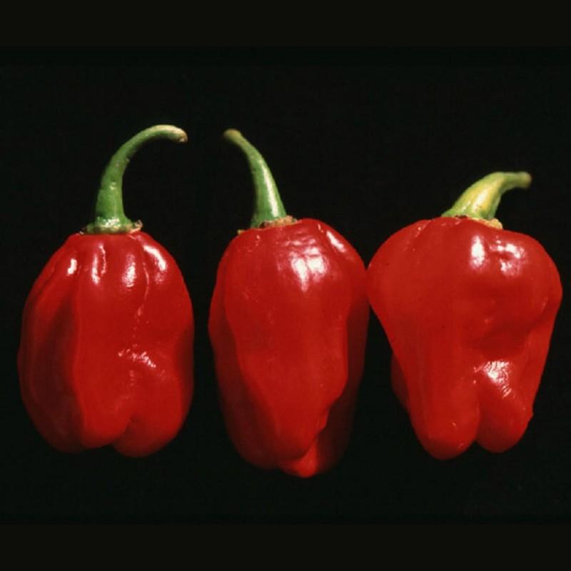 Sementes de Pimenta Numex Suave Red  - 2