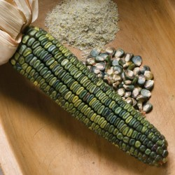 Sweetcorn Seeds Oaxacan Green  - 1