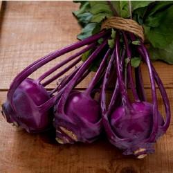 Vienna Purple Kohlrabi Samen  - 2