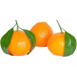 Sweet Mandarin orange Seeds (Citrus reticulata)  - 4