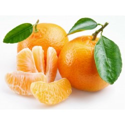 Sweet Mandarin orange Seeds (Citrus reticulata)  - 5