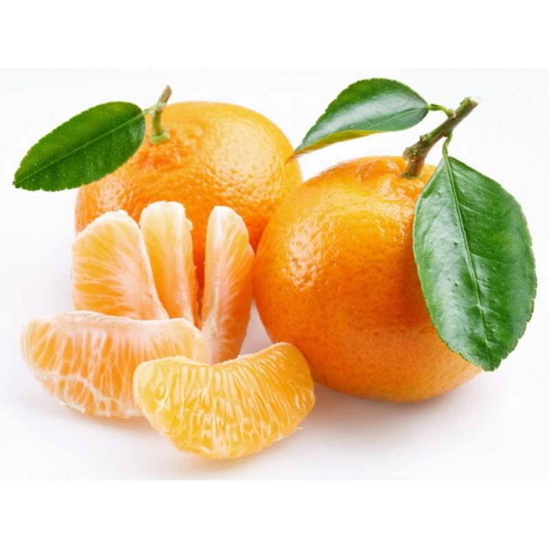Mandarina Seme ili Mandarinka (Citrus reticulata)  - 5