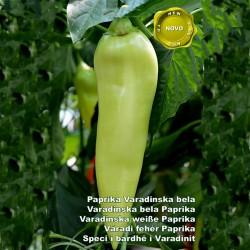Varadinska White pepper seeds  - 2