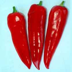 Semi di peperone dolce di Kurtovska Kapija  - 3