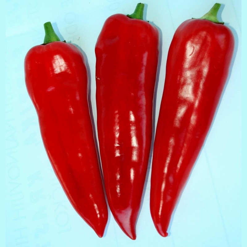 Kurtovska Kapija Sweet Pepper Seeds (Kurt's Gate)  - 3