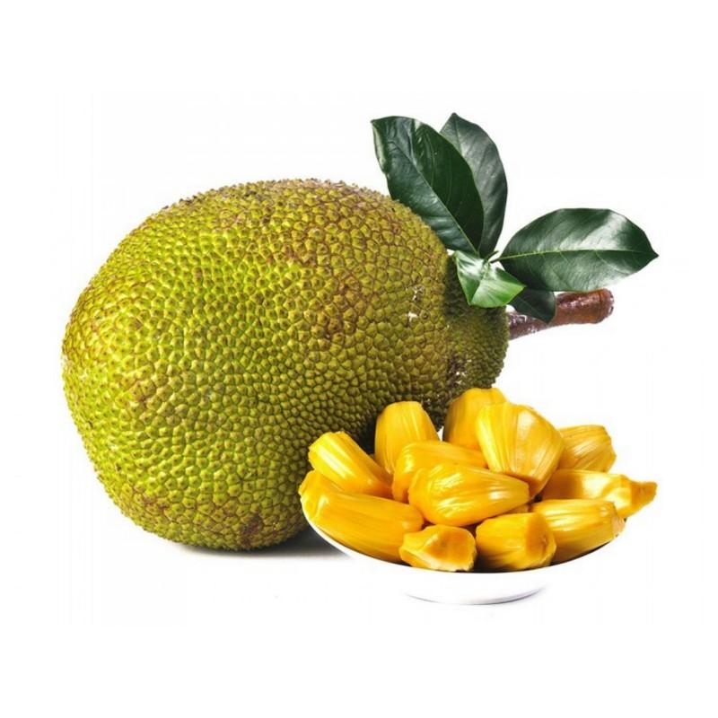 Jackfruit Seme Egzoticno Voce (Artocarpus heterophyllus)  - 8