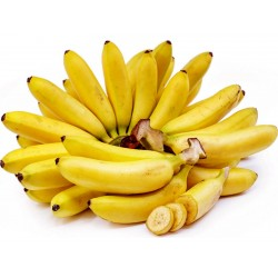 Wild Banana Seeds (Musa balbisiana)  - 6