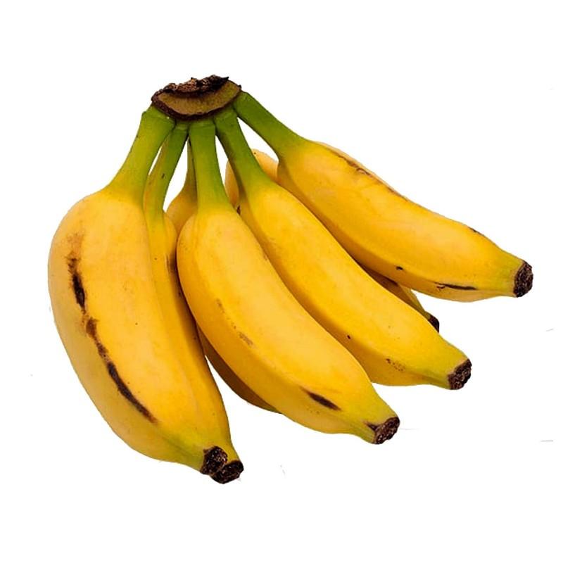 Musa acuminata seme Banane - Dwarf cavendish - jestiva banana  - 2