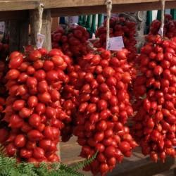 Σπόροι Τομάτας - Principe Borghese  - 2