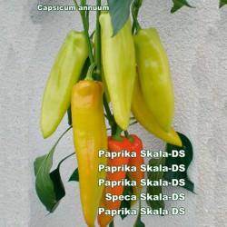 Big Sweet Pepper Seeds Skala  - 2