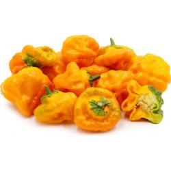 Sementes De Pimenta Jamaican Yellow Amarela