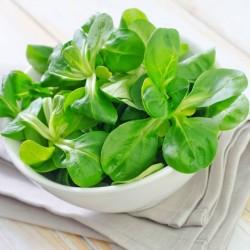 Sementes de salada de Canónigos  - 2