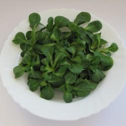 Gewöhnliche Feldsalat Samen  - 1
