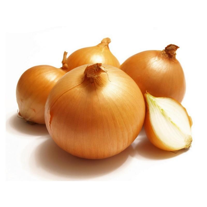 Dutch Yellow Onion Seeds  - 1