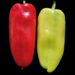 Sementes de pimenta doce Orelha de Elefante Branco  - 1