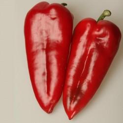 Sweet Pepper Seeds Amphora  - 5